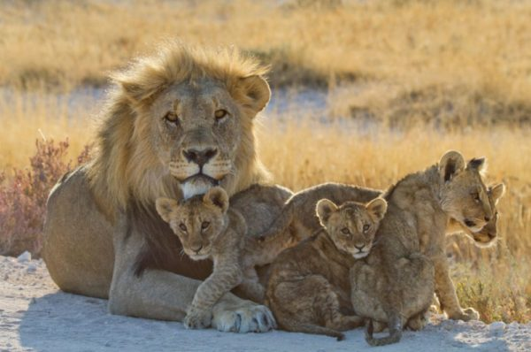 La Namibie forcée de vendre aux enchères des animaux sauvages