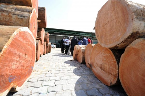 Gabon: l'ombre du scandale du Kevazingo plane sur le Salon du bois