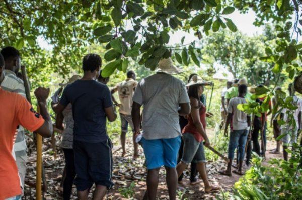 Au Bénin, un camp d'entraînement pour apprendre l'agriculture bio
