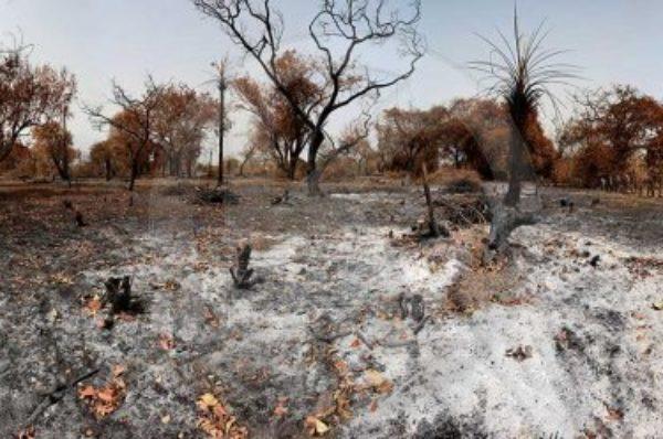 Au Sénégal, une forêt de baobabs sacrifiée sur l'autel de l'industrialisation