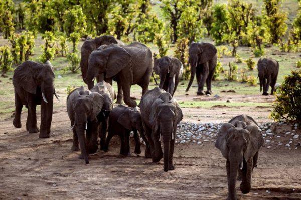 Le Zimbabwe, frappé par la sécheresse, prépare une migration massive d'animaux sauvages