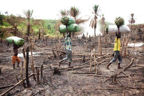 En Sierra Leone, la désertion des consultations médicales inquiète