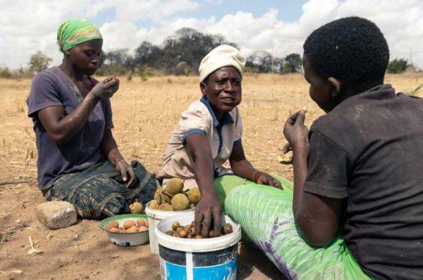 Au Zimbabwe, l'imminence d'une famine « créée par l'homme »