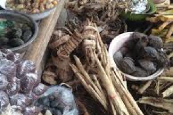 « La médecine traditionnelle peut contribuer à une couverture santé universelle en Afrique »