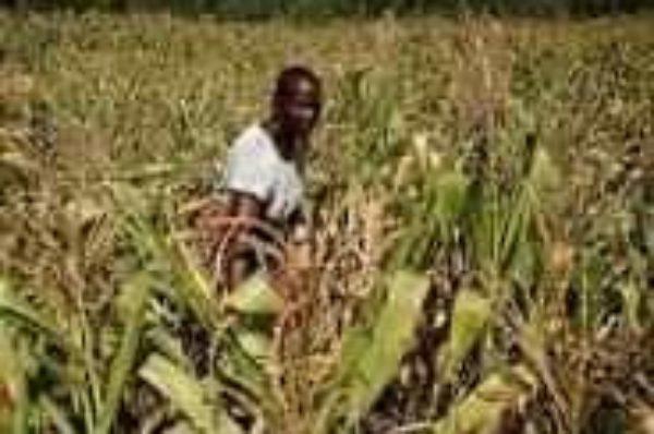 L'ONU met en garde contre une nouvelle mauvaise récolte au Zimbabwe l'année prochaine
