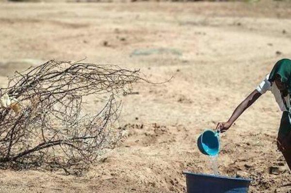 Actualité  International  Afrique Sécheresse en Afrique australe : ce signal fort du changement climatique