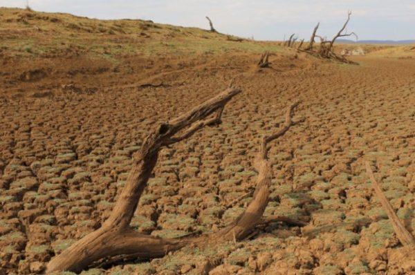 La Namibie envisage d'importer du bétail alors que la sécheresse décime les troupeaux locaux
