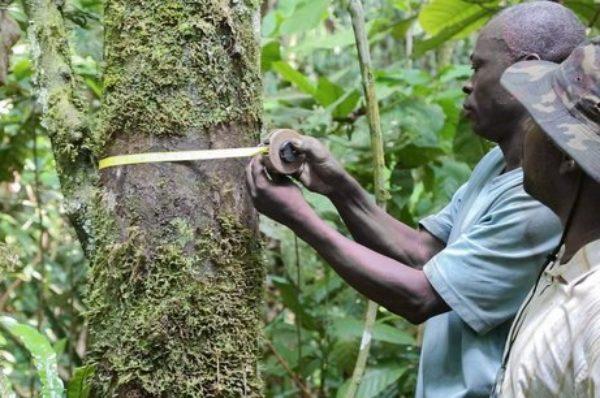 Congo : pourquoi démocratiser l'accès aux ressources forestières de la Sangha