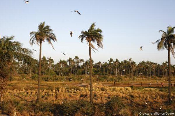 La Casamance inquiète de l'arrivée de Bissau-guinéens