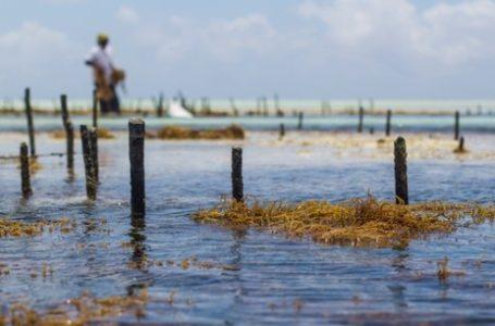 Acquaculture
