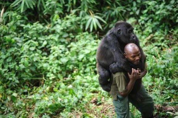 Le parc des Virunga, théâtre d'un conflit sanglant