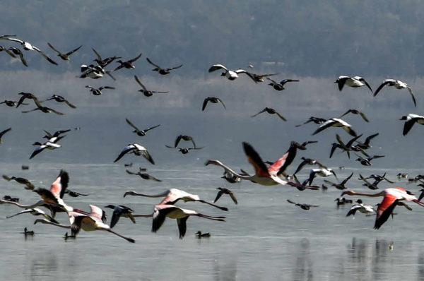 A Tunis, un projet d'aménagement de la lagune inquiète les défenseurs de l'environnement