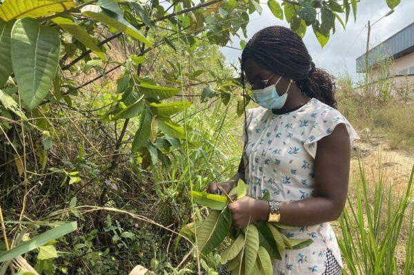 Au Cameroun, un insecticide biologique pour lutter contre le paludisme